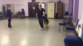 Competition Class Dog Training By East Grinstead Dog Training Club