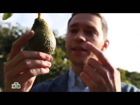 Авокадо - овощ или фрукт?
