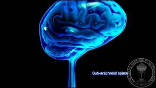Anatomy of the brain The Cerebrospinal Fluid CSF2
