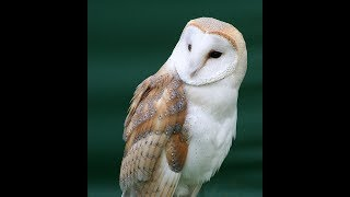 Forbidden History LIVE - 105  WORDS that KILL - ORIGINAL THOUGHT - Dezert-Owl