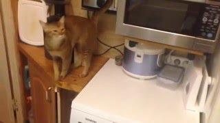 видео Как помыть котенка