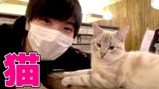 ご飯あげ放題!人生初の猫カフェで大興奮!!