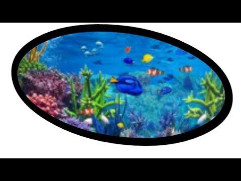 Memberi Makan Ikan Hias,Di Aquarium - Indonesia
