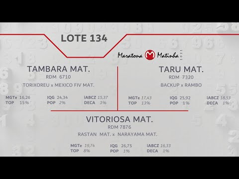 LOTE 134 Maratona Matinha