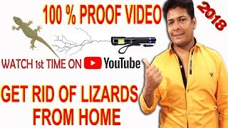 how to get rid of house lizards permanently