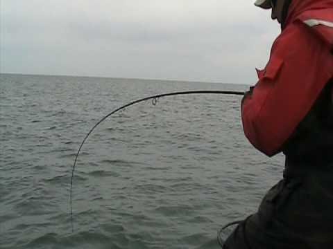 Monster Trout Biggest Lake Trout  Ever Lake Michigan Fishing!!!!!  For Me!!