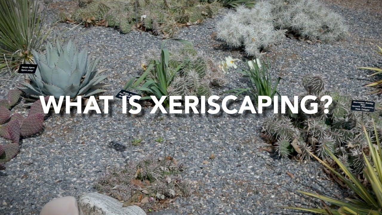 Xeriscaping: How to create a water-wise, colorful yard in ... on backyard lawn ideas, backyard gardening ideas, backyard drought ideas, backyard family ideas, backyard butterfly garden ideas, backyard nursery ideas, backyard patio ideas, backyard sod ideas, backyard fruit trees ideas, backyard walls ideas, backyard grading ideas, backyard arizona ideas, backyard zen ideas, backyard landscaping ideas, backyard plants ideas, backyard spring ideas, backyard water ideas, backyard diy ideas, backyard wood ideas, backyard planting ideas,