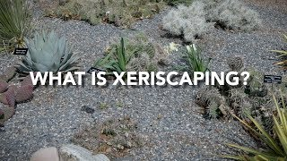 What is Xeriscaping?