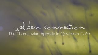 Walden Connection: The Thoreauvian Agenda in Upstream Color