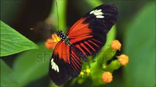 happy new year 2018 top 5 Beautiful Butterfly
