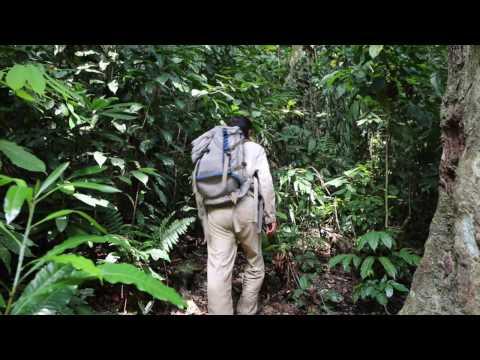 Solomon Islands: Trees Grow on Memories