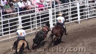 Calgary Stampede Rodeo Rams Horses