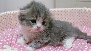 「猫かわいい」 すごくかわいい子猫 - 最も面白い猫の映画2017 #95 http...
