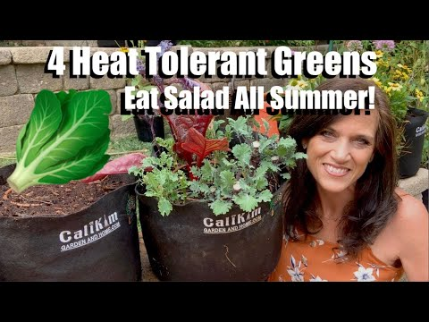 How to Plant 4 Heat Tolerant Greens Eat Garden Fresh Salads All Summer Long! ��☀️��