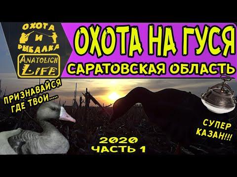 Охота на гуся 2020 (часть 1) Саратовская область