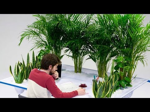Как комнатные растения влияют на человека