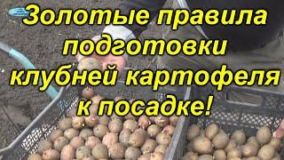 какой картофель выбирать для посадки?
