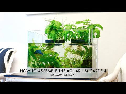 Aquarium Garden DIY Aquaponics Kit For Any Tank Indiegogo