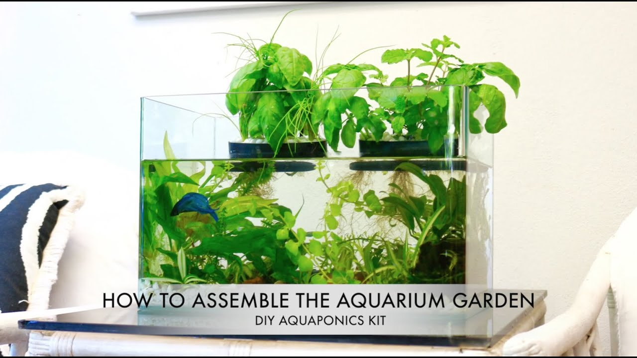 The Aquarium Garden DIY Aquaponics Kit