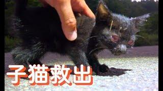 道路の溝に落っこちていた子猫がいたので救出してみたら...