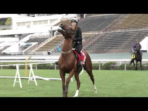 [HKIR] Trackside Interview - Craig Williams (Jockey of CRITERION)