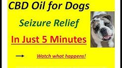CBD Oil for Dogs Cats   Where to buy in Macon Atlanta, GA