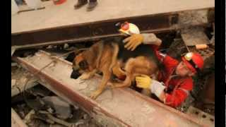 911 ~ K 9/11 Rare photos of Search and Rescue dogs at Ground Zero