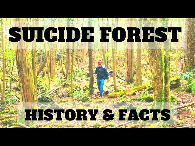 INTO THE SUICIDE FOREST | TravelerBase | Traveling Tips & Suggestions