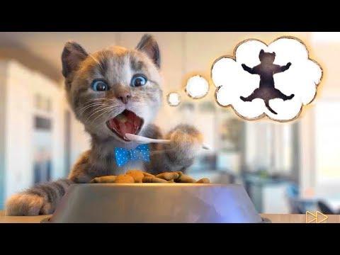 Permainan Kucing Lucu - Game Lucu Anak Anak