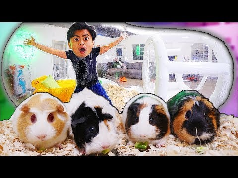 Living in a GIANT BUBBLE TENT with Guinea Pigs!