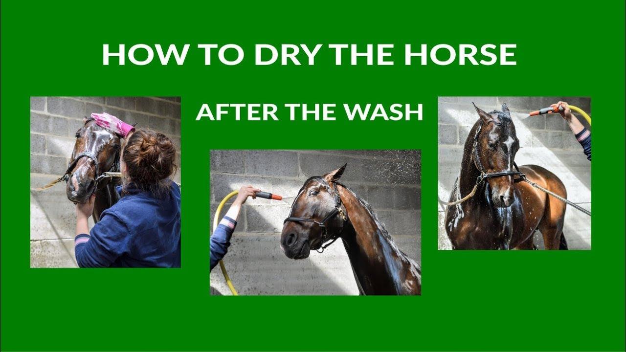 Horses S Rug Dryer To Dry Wet Horse