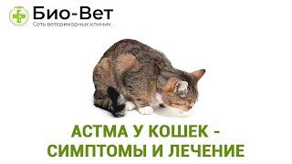 Астма у кошек- симптомы и лечение