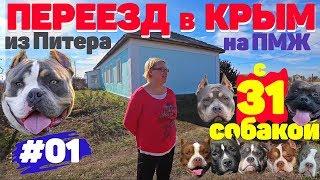 Переезд в Крым на ПМЖ с 31 собакой. Питомник собак Американский Булли. #01