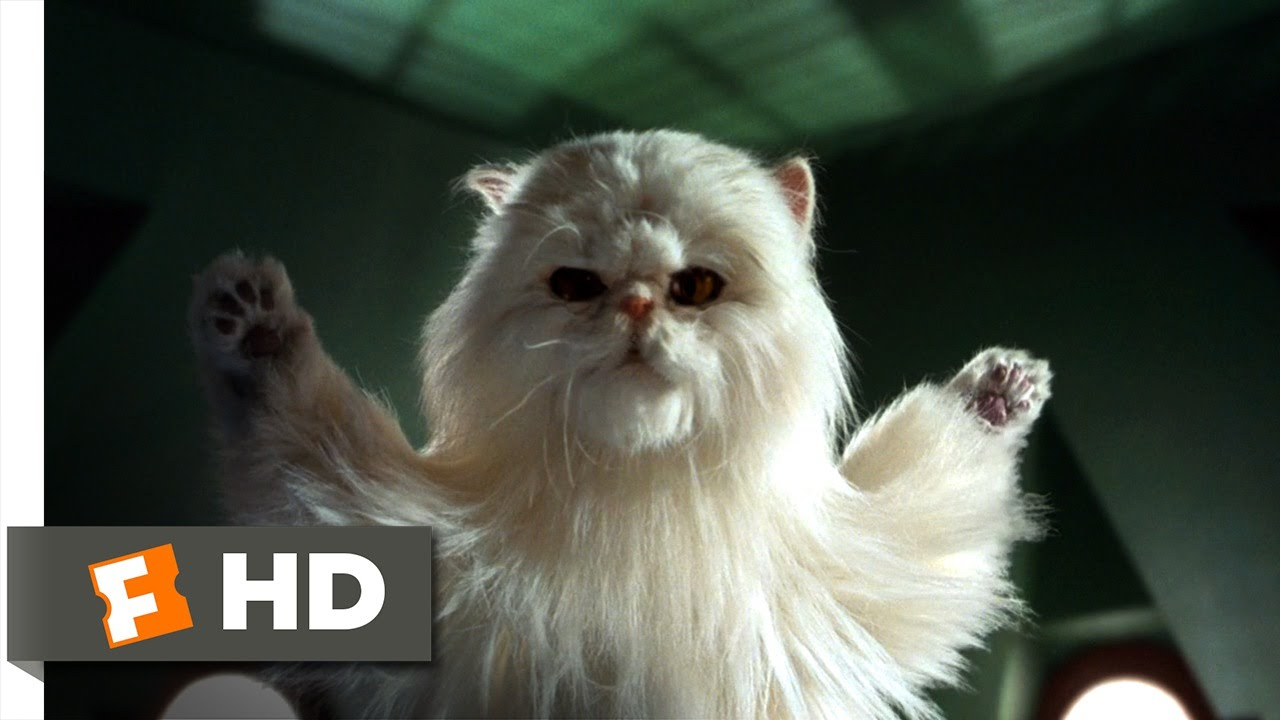 Cats & Dogs (7/10) Movie CLIP - Our Day Has Come! (2001 ...  Cats & Dogs (7/...