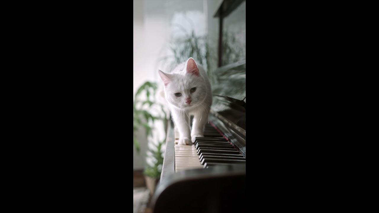 Gatito es un MAESTRO tocando el Piano