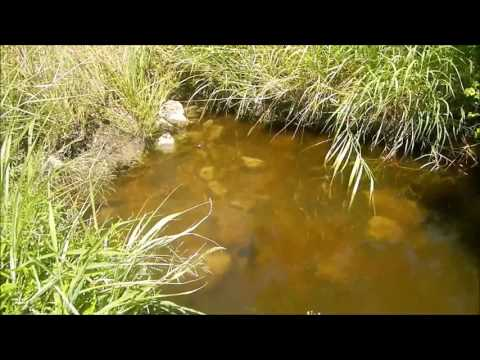 Flathead Catfish spawning from YouTube · High Definition · Duration:  3 minutes 7 seconds  · 880 views · uploaded on 7/22/2015 · uploaded by MaumeeRiverMonsters