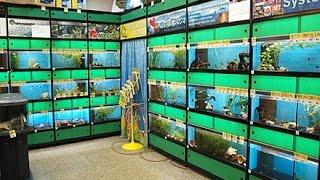 Зоо магазин Petco в Нью Йорке - настоящий зоопарк 07 09 14