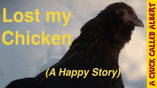 Lost my chicken - (A Happy Story)