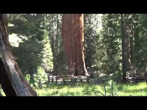 General Sherman Tree (Sequoia National Park)