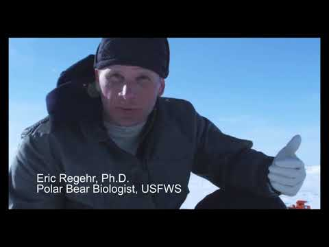 Polar Bear Research on Chukchi Sea