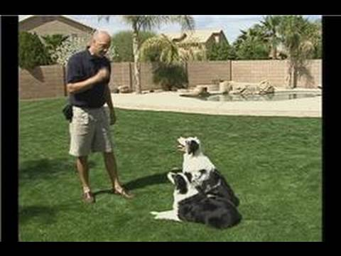 how to train a puppy to listen to commands