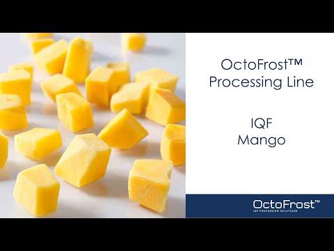 OctoFrost IQF Processing Line - Mango