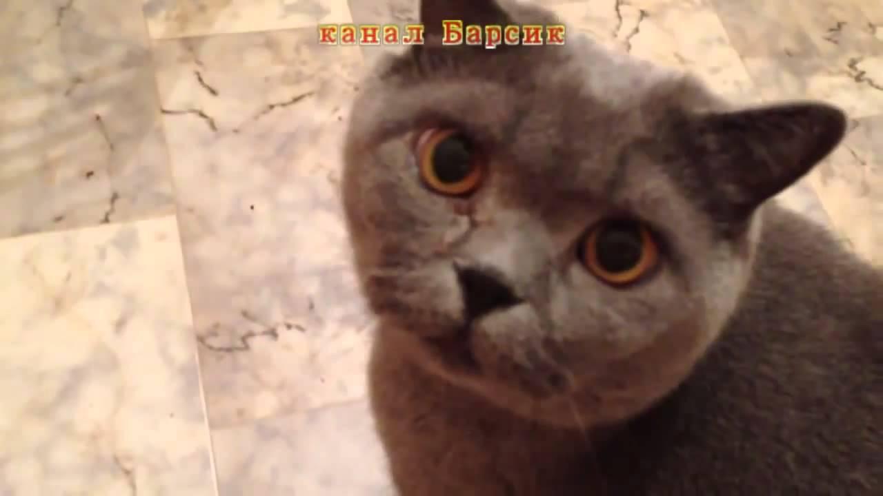 Слушать песню про кота который взорвался