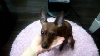 ランクルのランと名付けられた愛犬のおやつタイムです。おやつのためな...