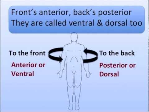 Anatomical Positions Song
