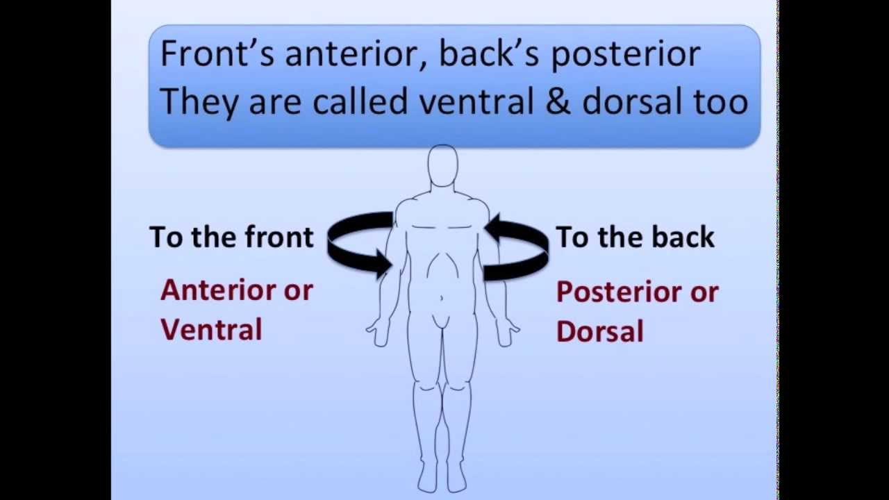 Anatomical Positions Song Youtube