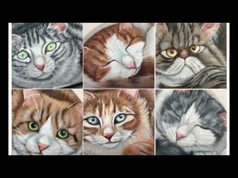 Diy Rock Painting Cats Ideas For Coloring Stones Garden