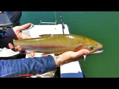 Waroona Trout With Nick Hocking Pt3