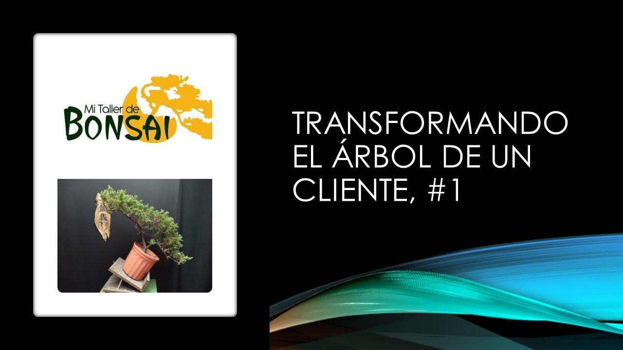 Transformando el árbol de un cliente #1