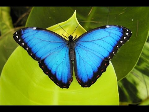 The Butterfly Farm In St Maarten